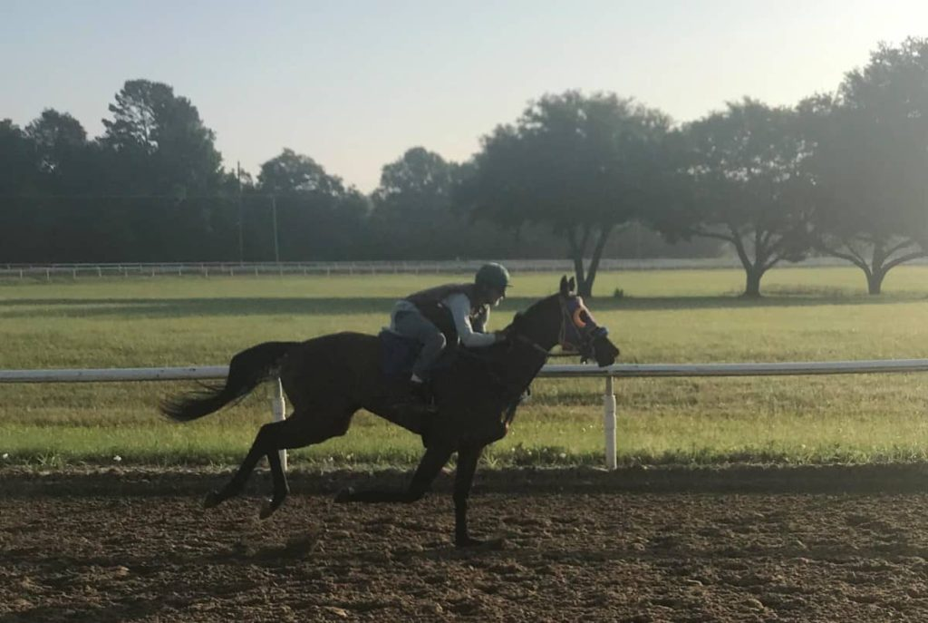 bred, racehorses,