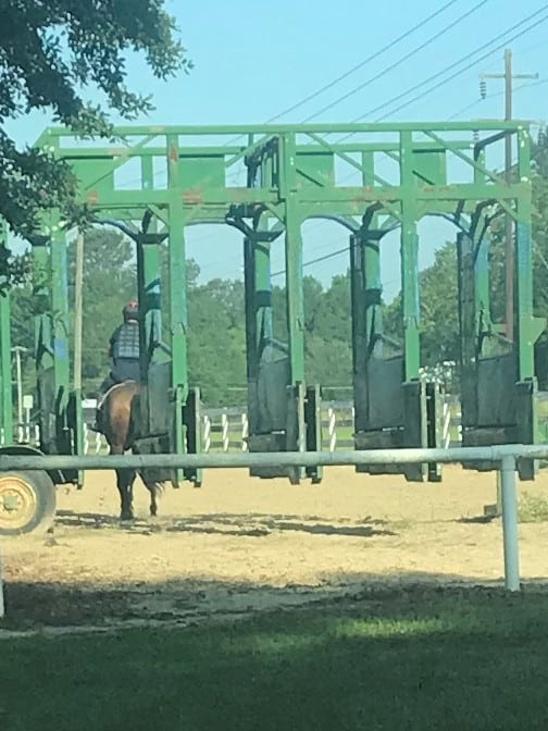 Picture of a set of training starting gates at the Folsom racehorse training center,