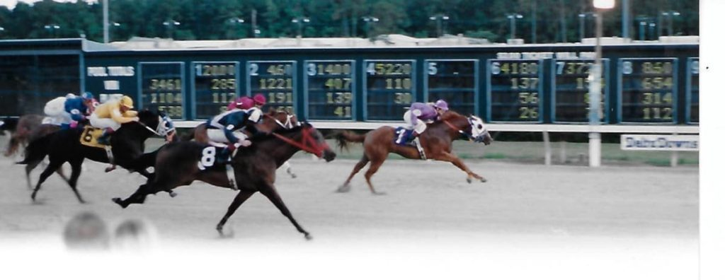 """Picture of one of our racehorses with a weird name, """"Geisha Moon Bug"""""""