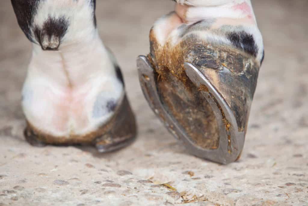 why horses wear shoes, horseshoes,