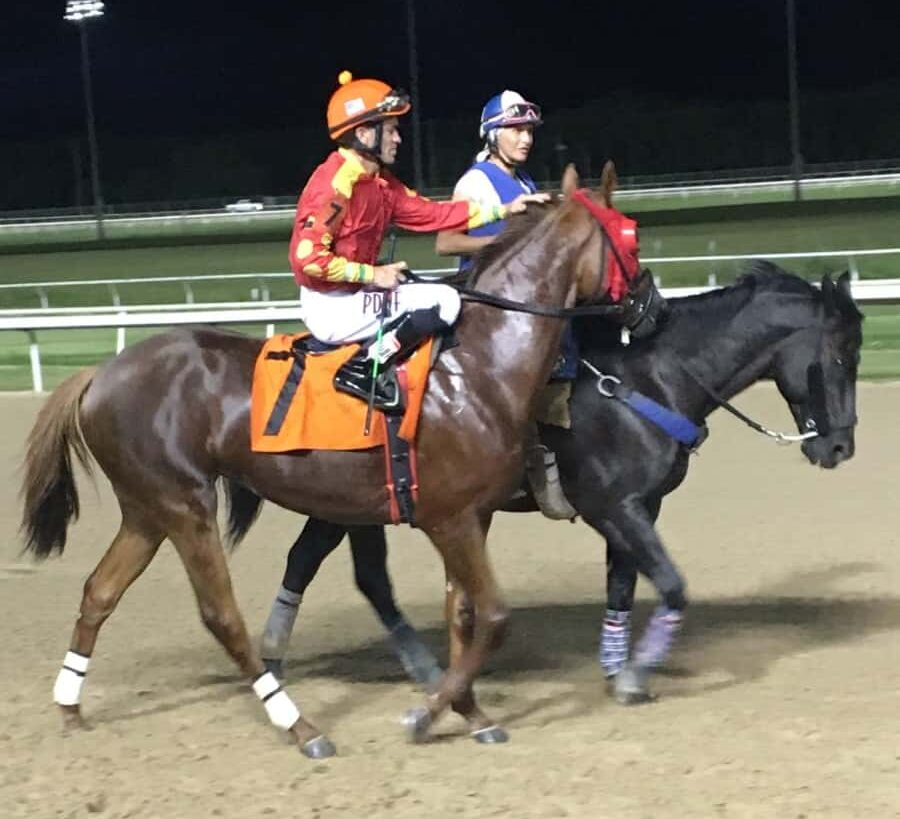 Picture of a quarter horse after a race.