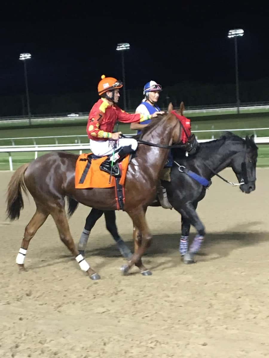 Why Do Race Horses Wear Masks And Other Gear