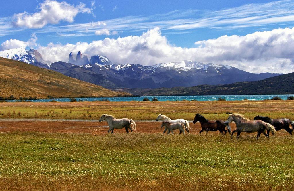 picture of wild horses,