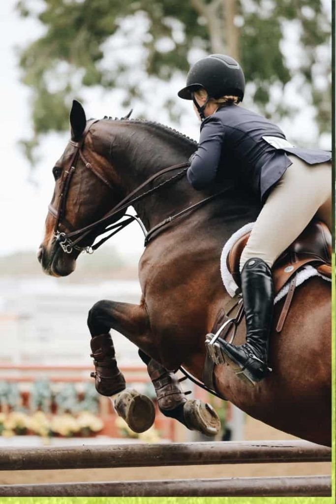 What S The Best Horse Breed For Me Top 3 Breeds By Activity