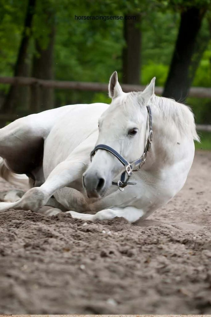 picture of a white horse lying down on the ground,