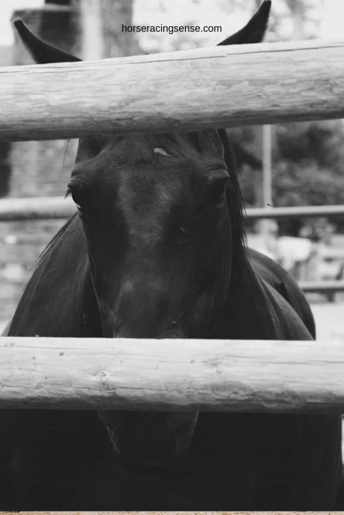picture of a horse with its eye open but may be sleeping,