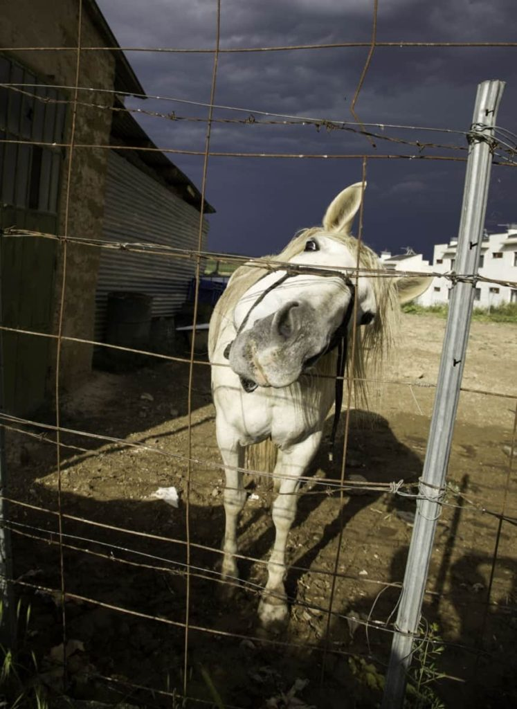 picture of a horse penned up in an unsafe environment,