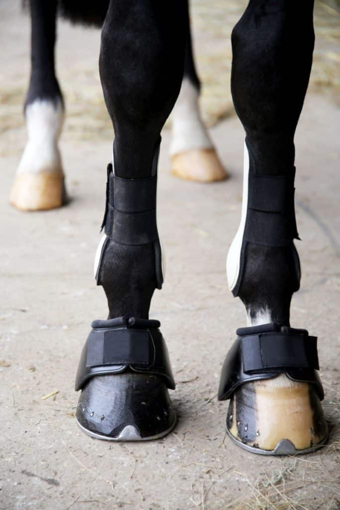 picture of a horse wearing hoof boots,