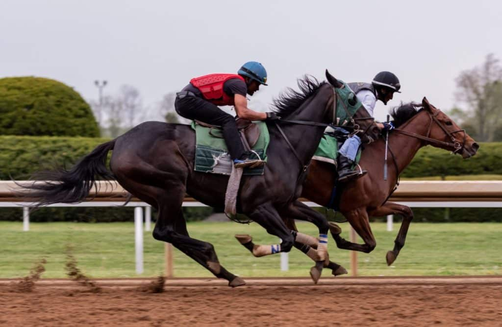 picture of two racehorses,