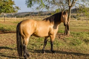 Supplies needed to keep your horse healthy and groomed