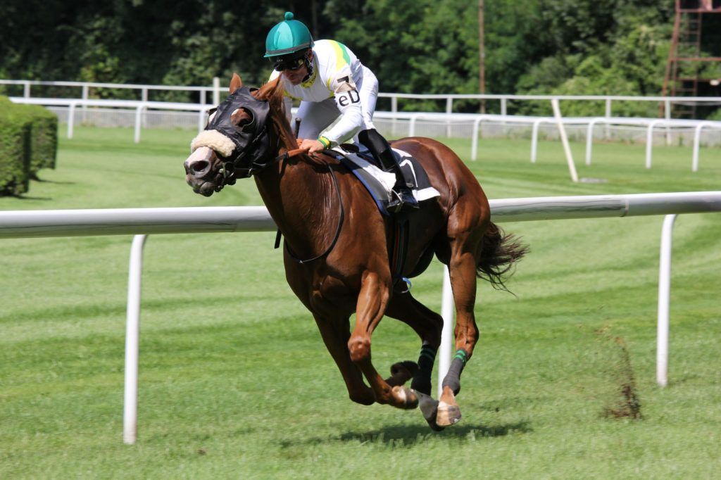 Picture of a racehorse running on a track.