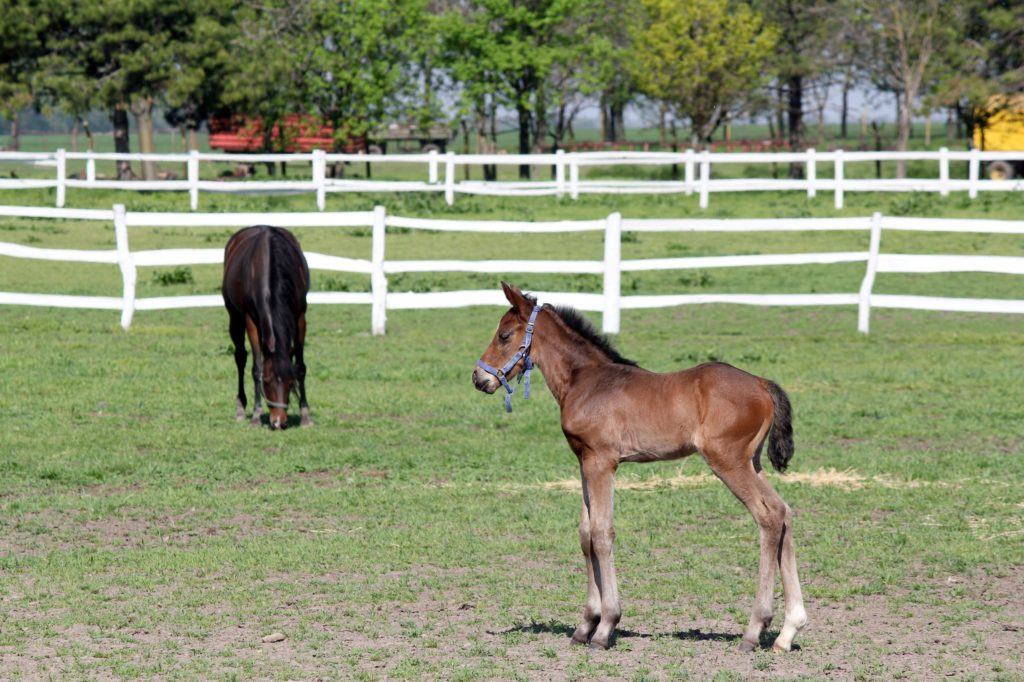 picture of a baby horse in a pasture,