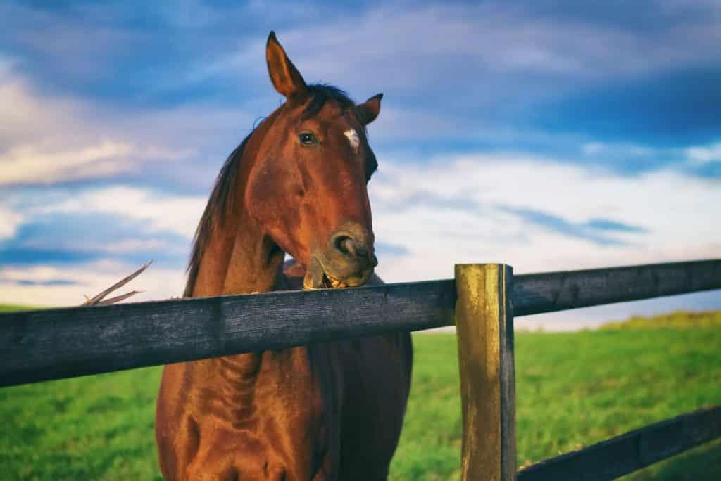 crib,horse,