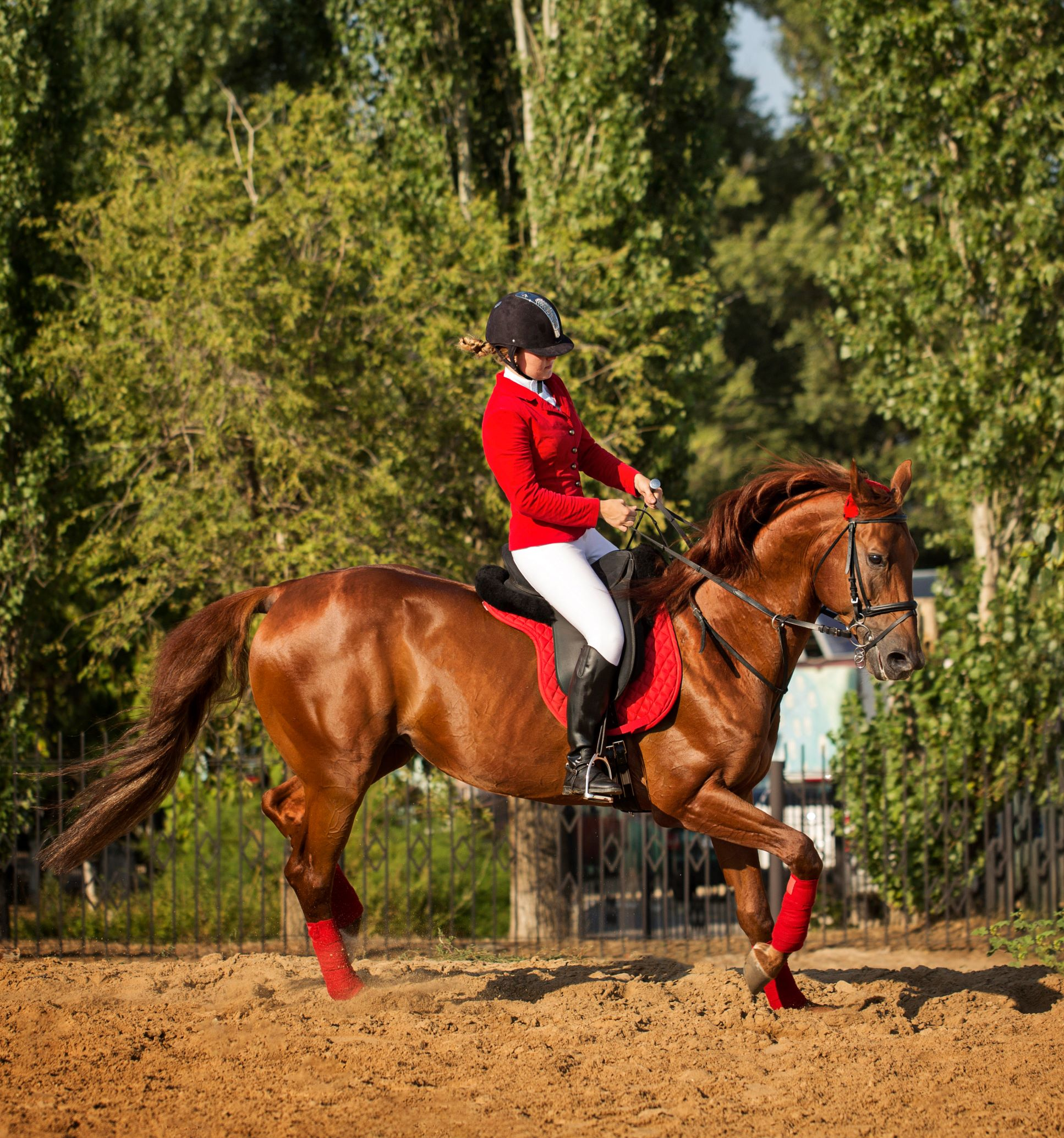 tennesseee walking horse,
