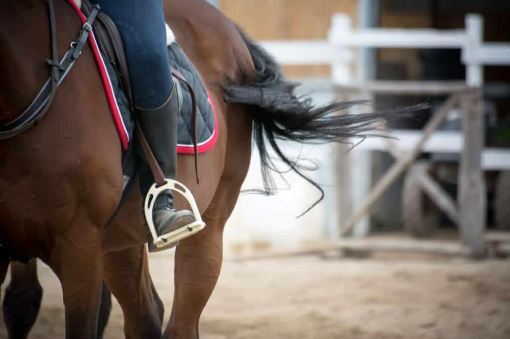 saddle stirrups,