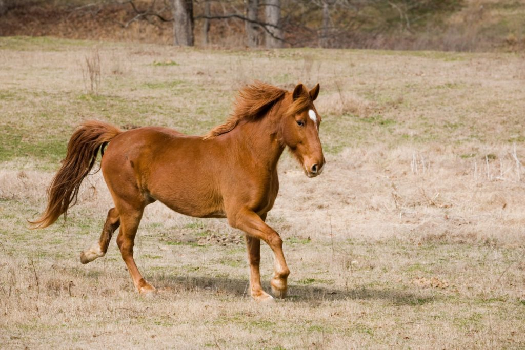 7 Most Common Horse Breeds In The Usa Can You Guess Them