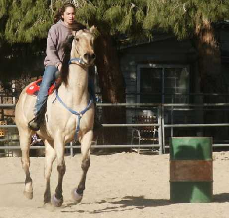 horse,riding,daily,