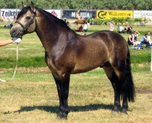buckskin, colors, buckskin horse, sooty,