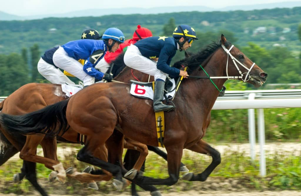 Why Do Racehorses Have to Pee so Bad? Fact, Fiction & Causes