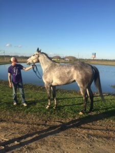 picture of a dapple gray horse near water, colors,