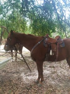 Picture of my grandsons' chestnut horse.