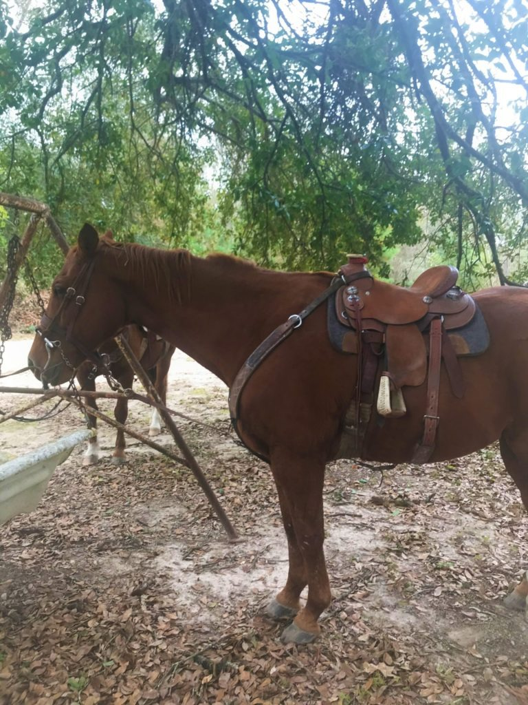 Picture of our grand children's' quarter horse