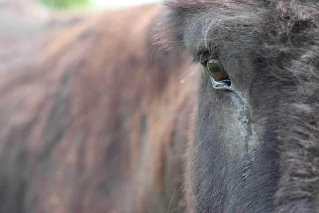 cry,horses,