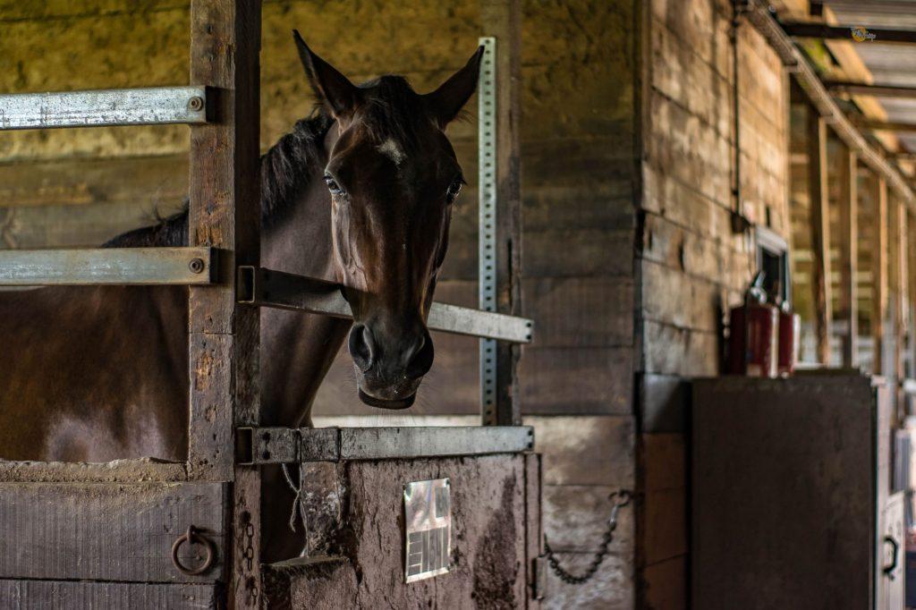 horses,head nod, head bob,