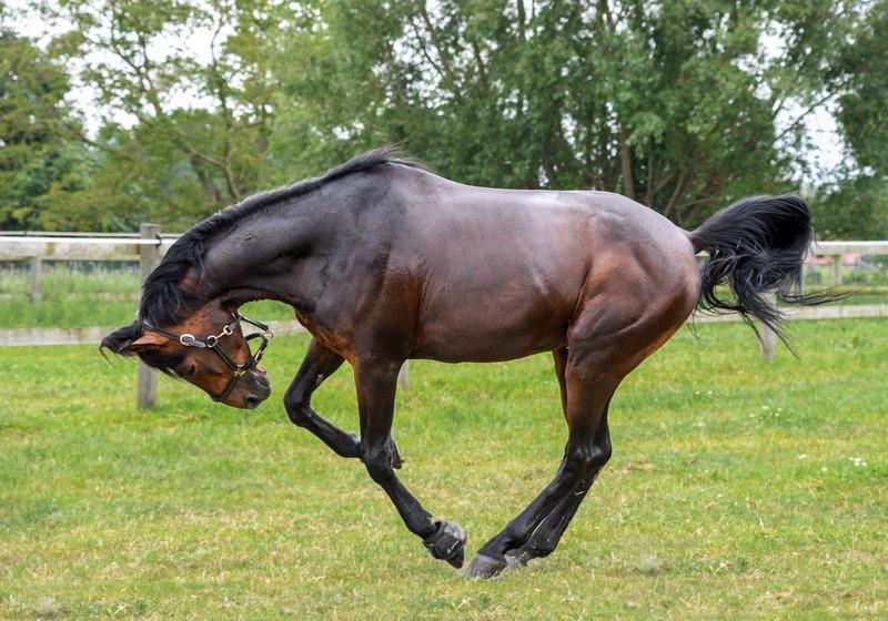 horse toys,horse treats,horse,