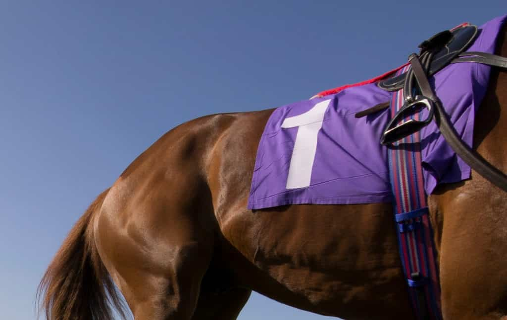 Picture of a racehorse,
