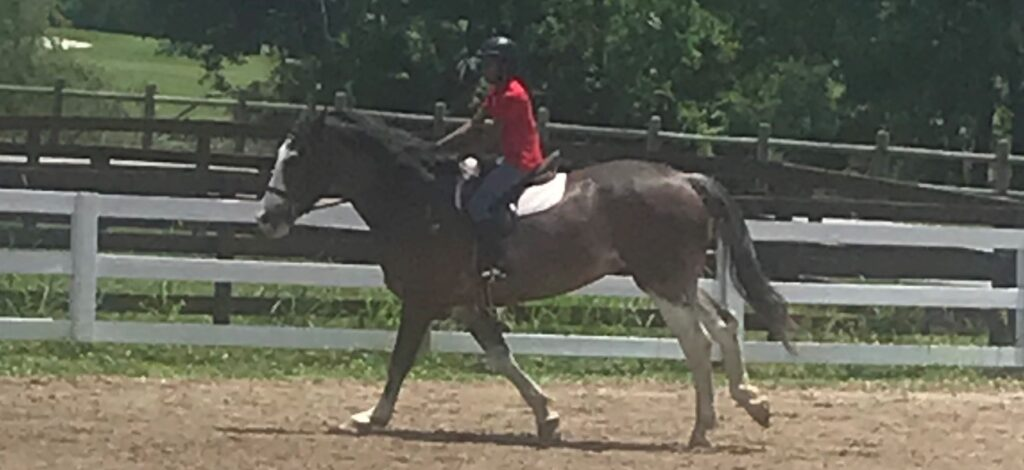 Picture of a Percheron ridden by a young girl training.