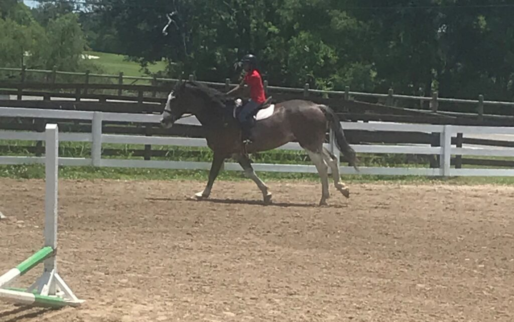 Picture of a girl during her horse riding lessons, she is riding a Percheron.