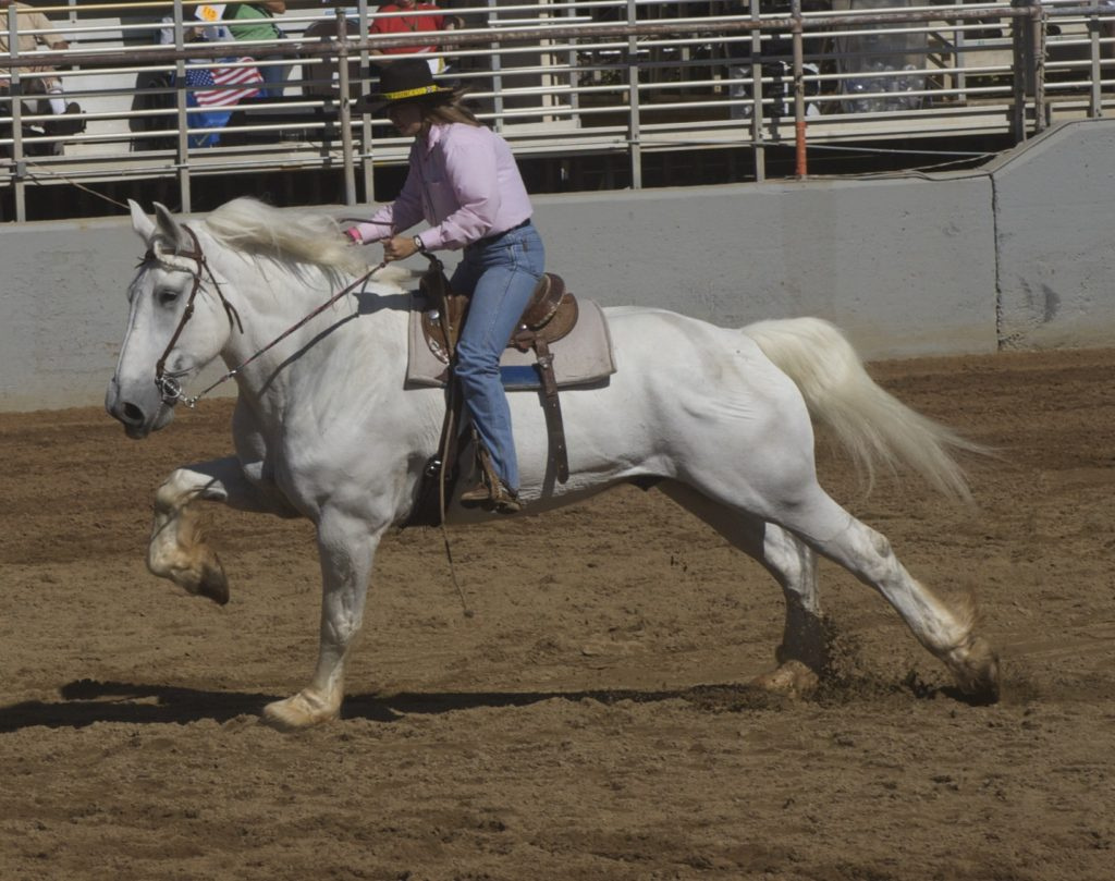 Percheron A French Draft Horse Breed Facts Colors Uses