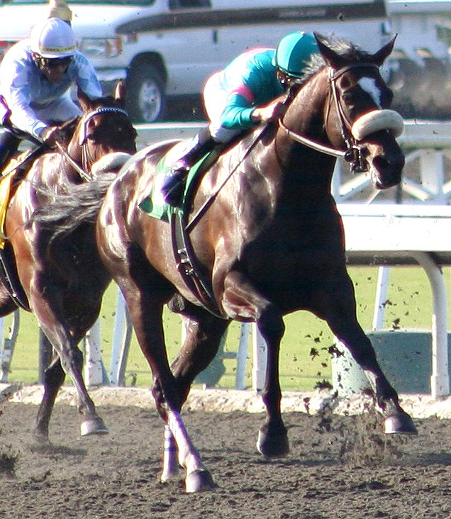 Picture of Zenyatta and other racehorses running down the track,