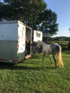 Picture of a horse loading in a horse trailer,