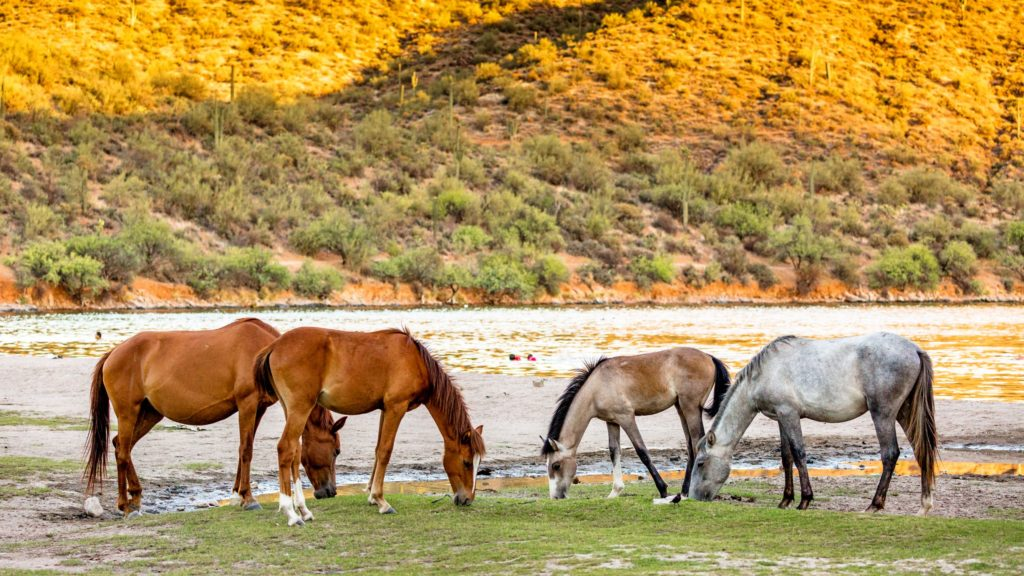 Picture of horses grazing in the wild.
