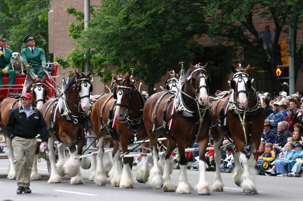 Picture of Clydesdales pulling a wagon.
