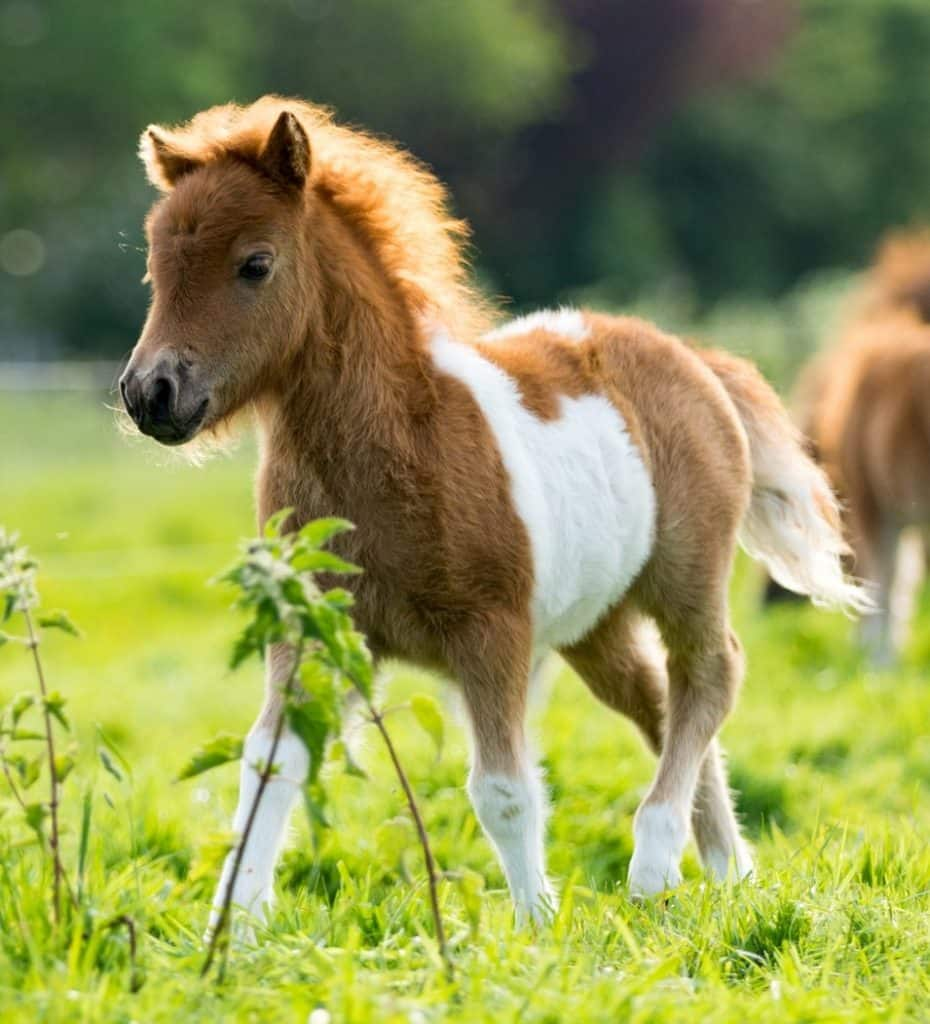 picture of a baby pony running in a field,
