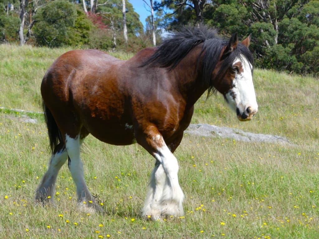 horses weigh,horse,weight,breed,