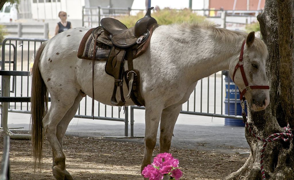 breed,ponies,