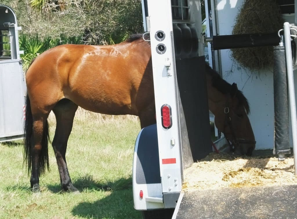 horse trailer,