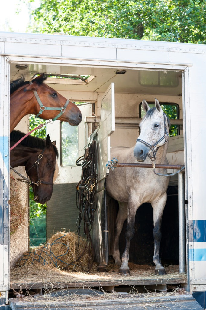 tall, horse trailer, height, bumper pull,