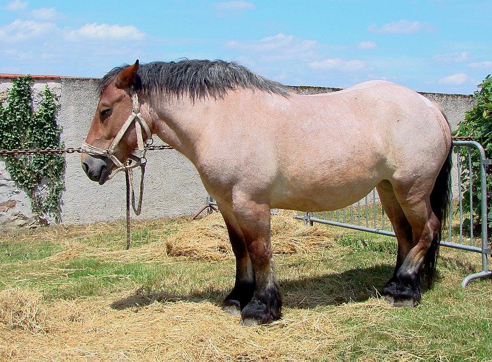 bay horse,bay roan,