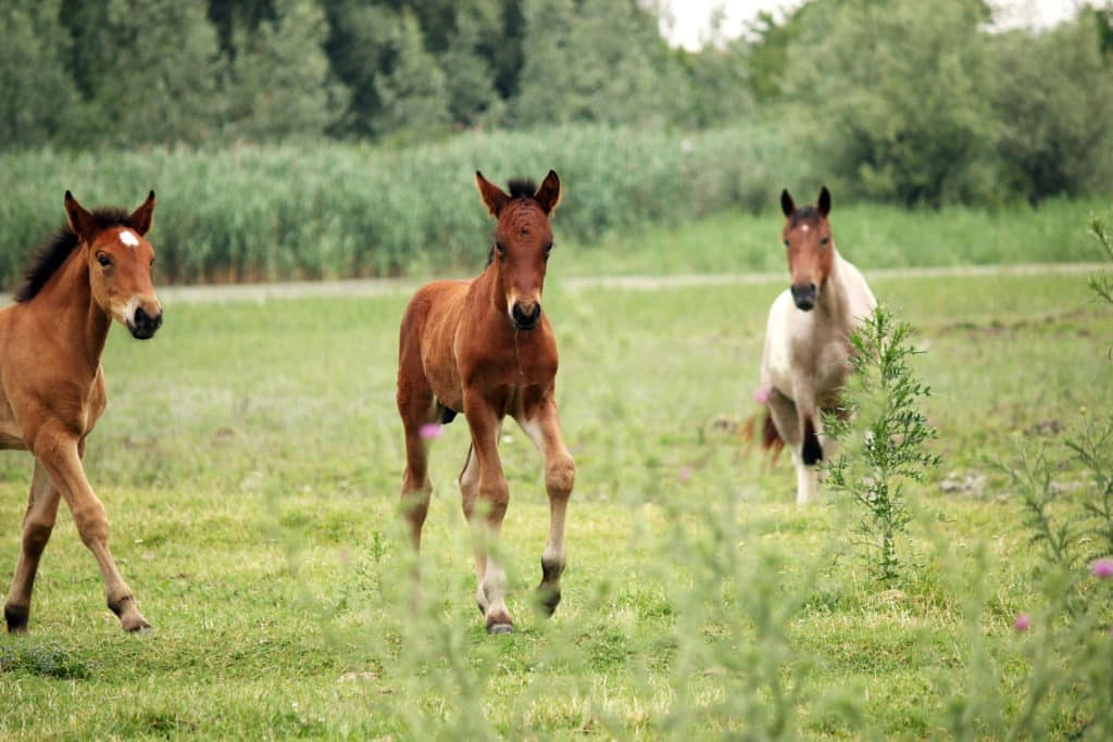 Are Baby Horses Born With Teeth Foal And Yearling Dental