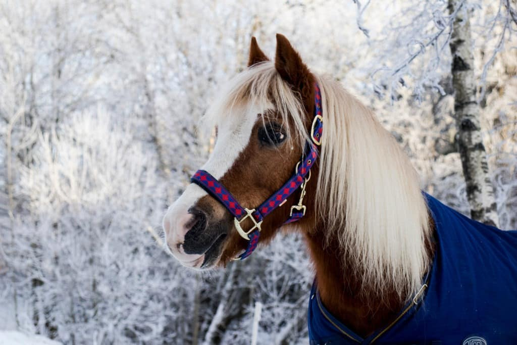 picture of a horse wearing a blanket in the winter,