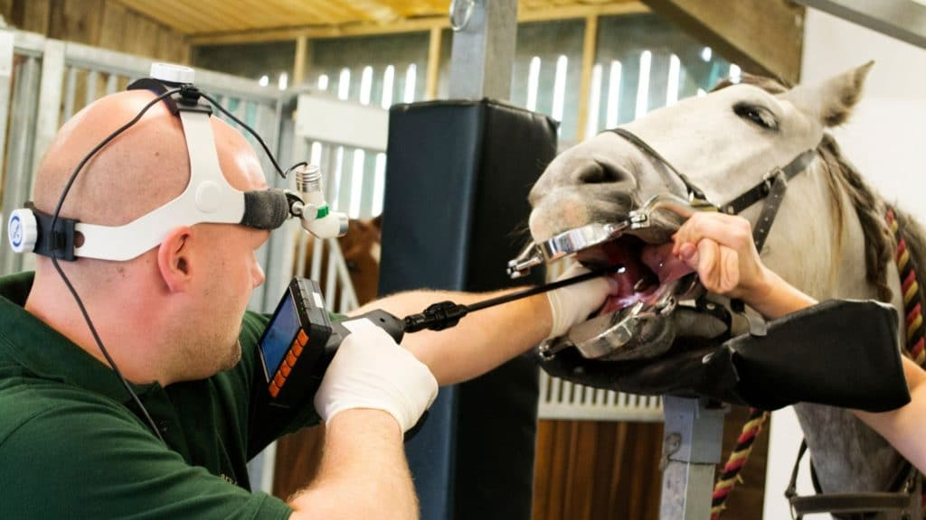 Picture of a vet performing a scope examination on a horse.