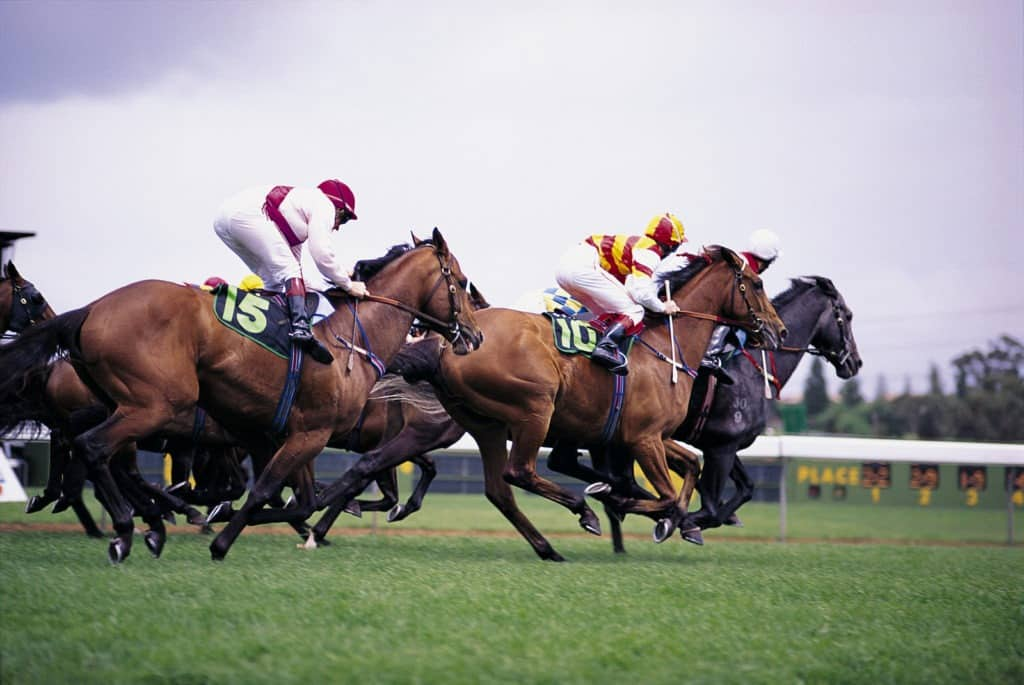 Picture of racehorse running on a turf track,