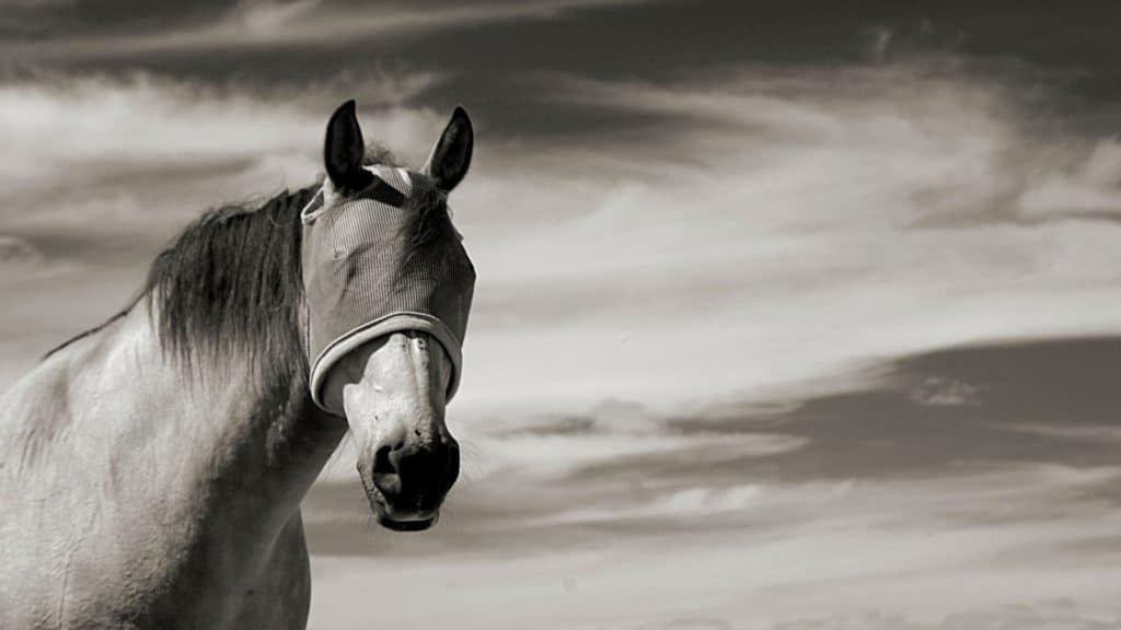 Picture of a horse wearing a fly mask,