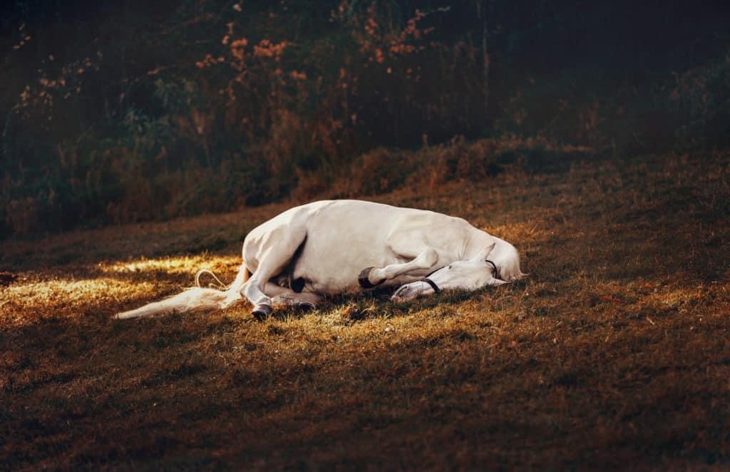 lay, sleep, horses, down,