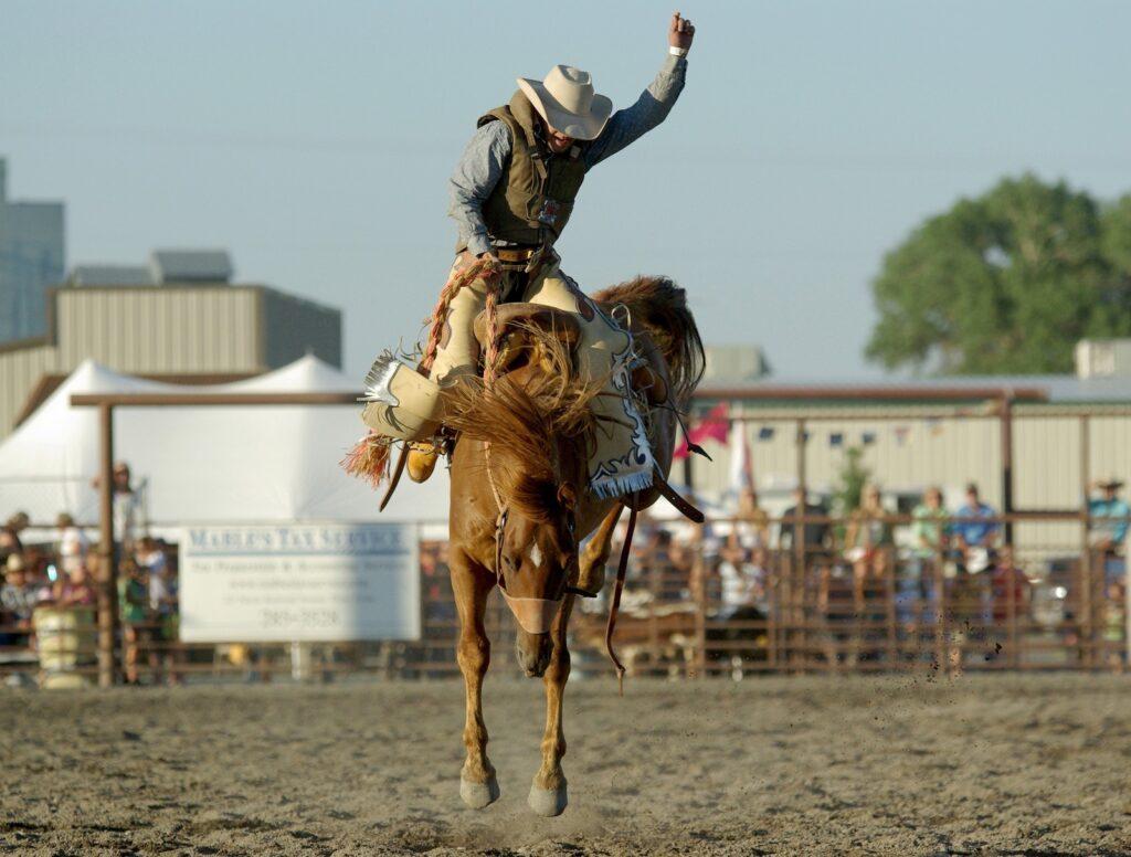 horses buck,